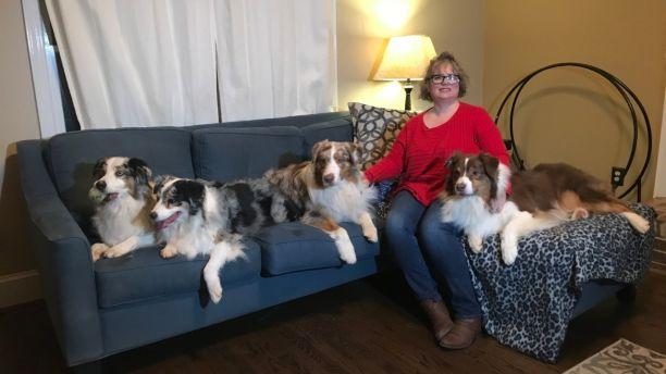 有狗狗的家庭注意了!犬流感席卷全美