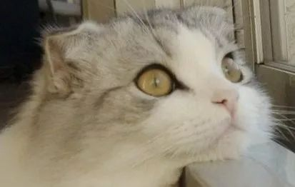 论在美帝猫冬的正确姿势