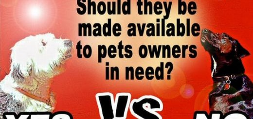 一项旨在扩大食品券囊括宠物食品的新提议