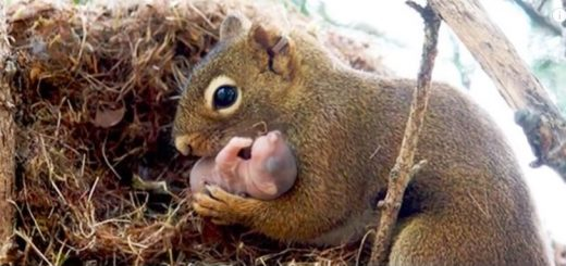 松鼠会收养孤儿,乌龟会自慰,土星会下钻石雨… 世界上的各种冷知识也是千奇百怪…