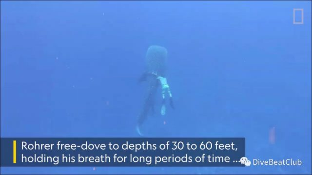 夏威夷游来一头幸运的鲸鲨