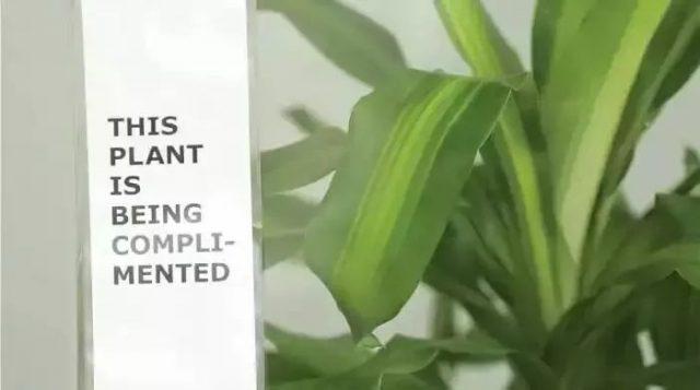 """那盆被霸凌30天的植物,终于被""""骂""""死了——揭示语言能量的惊人秘密"""