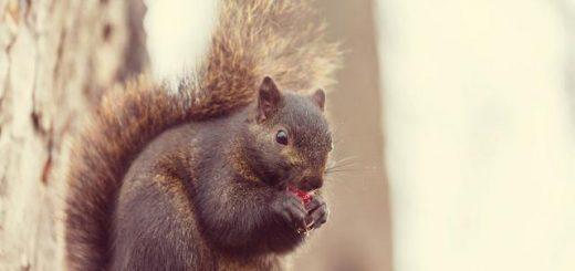 美国男子捕获松鼠开心享用 却因它染上怪病丧命