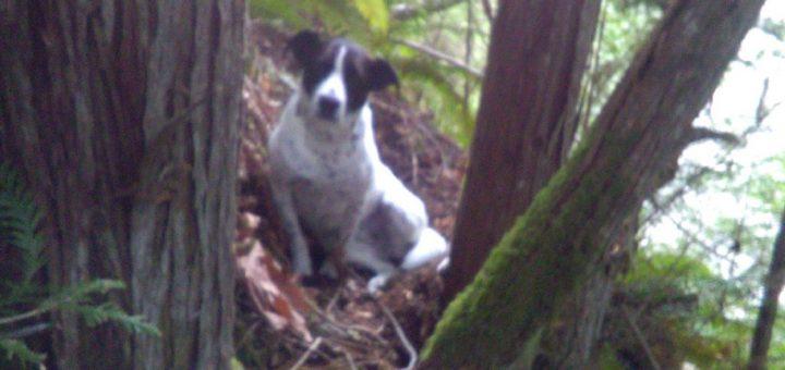 徒步旅行时主人意外死亡,狂吠的狗帮助搜救员发现尸体