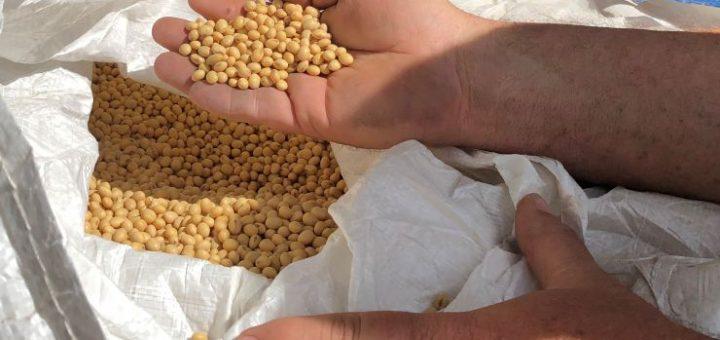 贸易谈判中方新姿态:启动采购美农产品