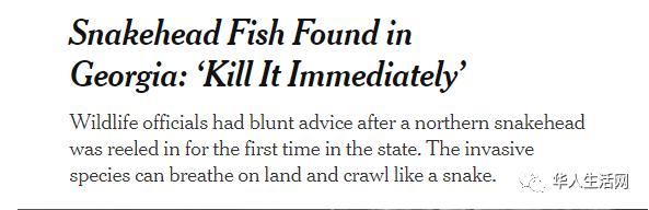立刻斩杀!中国鱼类入侵美国,佐治亚州官员急哭了