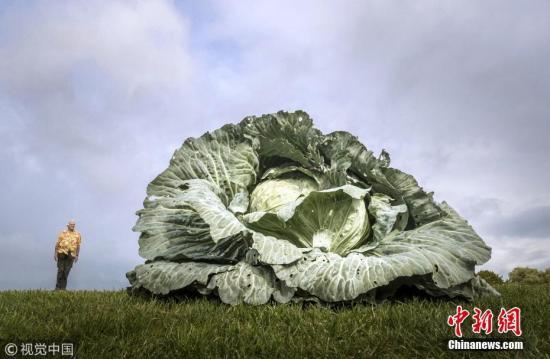 觉得蔬菜吃起来很苦?研究:可能是基因在作怪