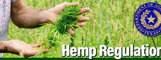 德州工业大麻合法化不到一年 问题多多