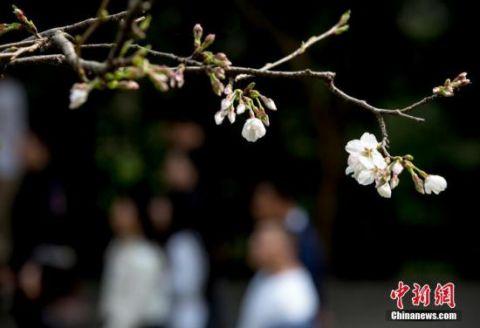 """武汉在美留学生自述:""""武汉精神""""让他乡游子始终有归宿"""