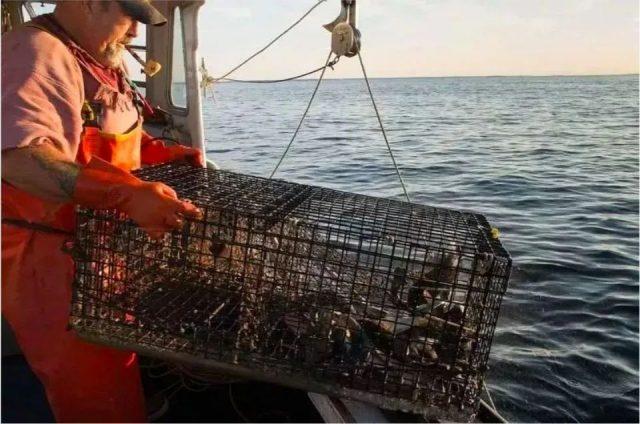LV没人买了 加拿大龙虾没人吃了 中国人再不出门 全世界都要撑不住了!
