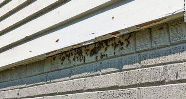 美国男子家中天花板发怪声,打开后惊呆:50斤蜂巢10万只蜜蜂