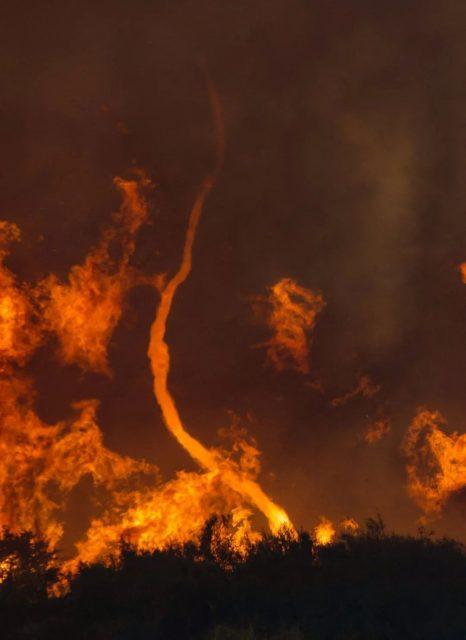 揭晓宝宝性别搞出森林大火,这家人如今可能被索赔数百万美元…