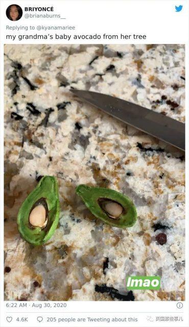 当歪果仁第一次尝试种菜.... 种出来的都什么迷你玩意哈哈哈哈....