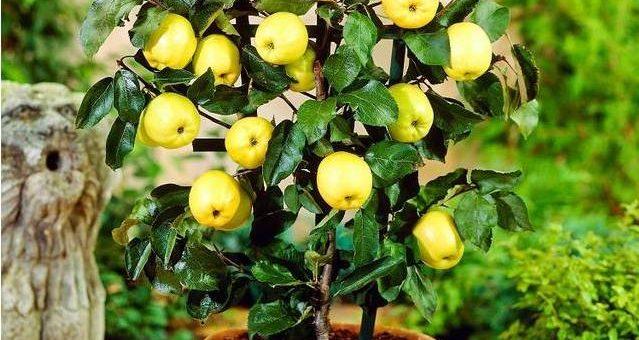 家里这样种水果,比花还好看又好吃!